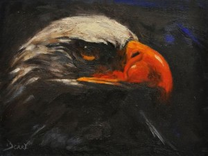 Eagle Eye 9x12 Oil on Linen Available